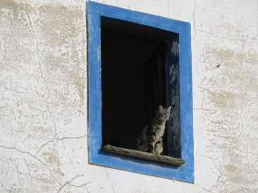 """This kitty was enjoying the day and surveying the garden below, probably seeking out a """"snack""""."""