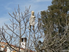 This very creepy looking doll was tied up in the fig tree. hopefully to keep the birds away and not to scare the local children!!!!