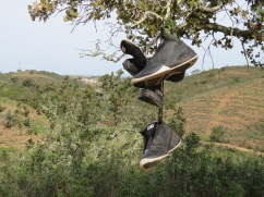 Shortly into our hike we came across these two pairs of sneakers hanging from the tree. An omen??