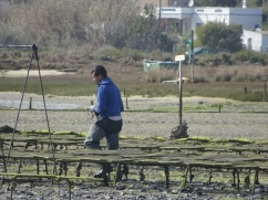 More oyster farm workers.