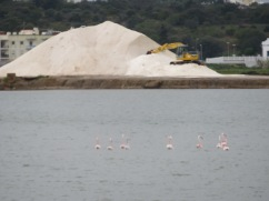 Flamingos feasting near the salt pile.