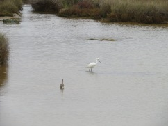 The egret was happily fishing and not at all put off by my presence.
