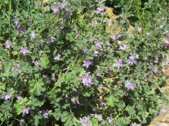 More wonderful flora bursting into bloom