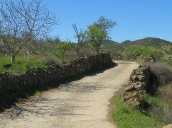 Another section of path