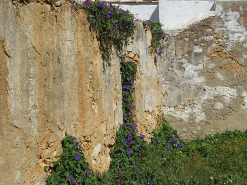 Parked next to this old wall that's been taken over by morning glories. They grow quite wildly all over the place and have been in bloom pretty constantly since our arrival in November. Always a lovely splash of colour.