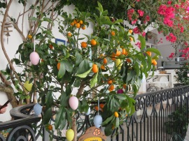 Easter eggs being hung on a decorative orange tree. Lovely.