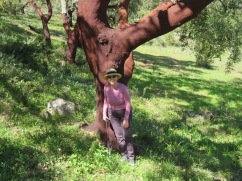 Patricia and the cork tree.....doesn't that sound like a great title for children's book?
