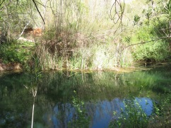 This lovely tranquil stream burbles away allows for beautiful opportunities like this one.