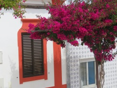 I thought the colour of the bougainvillea and the paint outlining the doors and windows was a good match.