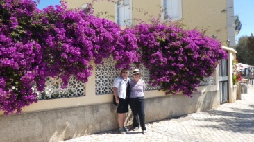 Just look at that wall of colour. Amazing bougainvillea