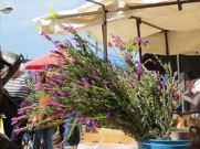 Many large bouquets of lavender for sale today........go into the mountains and pick it then sell it to the tourists....why not. Honest work.