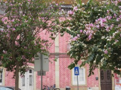 I liked the pink flowers against the pink building.