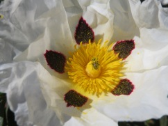 Look at the center and you'll see a tiny bug drunk on pollen. It is covered.