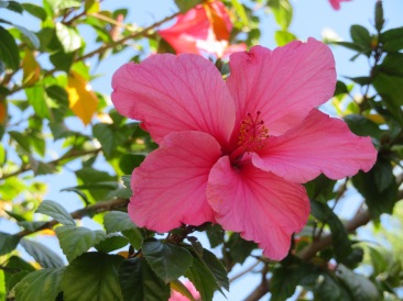 These blooms are more of a pinwheel shape and much larger than the lower part of the tree.