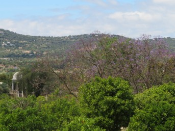 You can see the purple of the jacaranda trees as they are bursting these days.