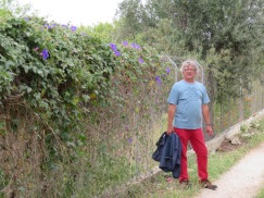 Heading up our driveway and checking out all the morning glories.