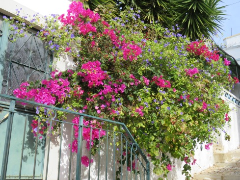 Bougainvillea is one of my favourites.