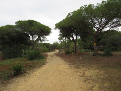 Part of the trail and the pines.