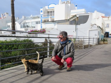 """Many many cats in the old town and """"cat houses"""" built in several places to accomodate them. People were putting food out and all of the cats looked healthy and happy. Of course, affection is something they can never get enough of."""