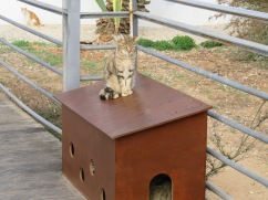 One of the cat houses....you can see a cat curled up inside.