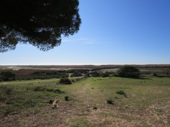 Another perspective on the Ria Formosa