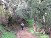 Gary enjoying a tranquil part of the trail surrounded by cork trees.