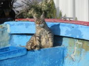 And this little critter seemed to have it's own boat!!! Looked very content in the afternoon sunshine.