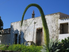 A cactus flower.