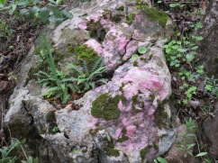 Loved this large stone and it's pinkish hew. Also the small fern growing from the crack in the stone. Mother Nature is certainly generous and what power!r