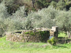 This old structure was beside a huge olive orchard. It might have been an old water mill at one point.
