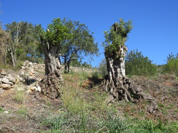 I loved how these ancient trees survive.