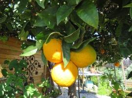 A big cluster of oranges.