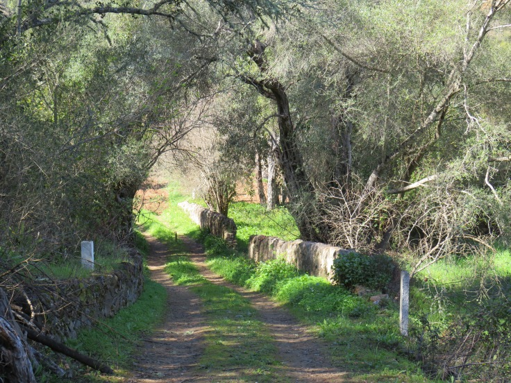 Part of the trail near the end, close to the well.