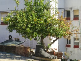 I love this. A huge cast of a foot beneath a lovely old gnarled lemon tree.