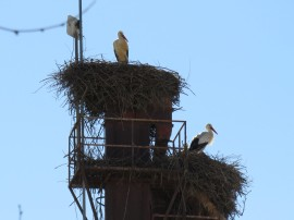 Stork condo?