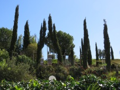 """A whole cluster of what I love to call """"Jesus Trees""""....usually they are only in cemeteries here but today, up the hillside."""