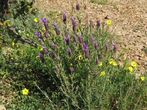 The combination of lavender and buttercups is always eye catching.