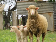 Look at the curiosity and innocence on these faces. Mama has a tiny protective look about her.