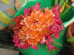 Alstroemeria, commonly called the Peruvian lily or lily of the Incas