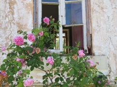 Something about the beauty of the roses and the sadness of the decaying abandoned house made me feel sad.