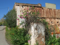 A turn in the road, an old empty and dilapidated building and a smattering of gorgeous roses scenting the air.