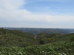 We are heading down the hillside, into yet another valley and towards our final destination, the Guadiana River.