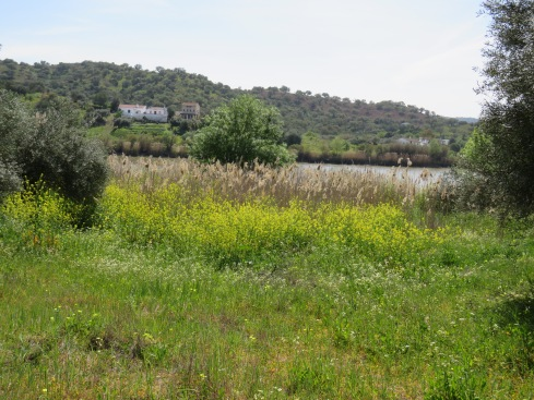 Right on the banks of the river. The grasses, wildflowers and reeds were swaying in the breeze.