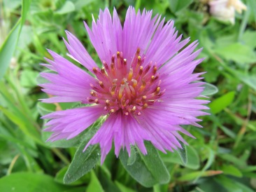 I love the intricacies of this thistle flower.
